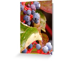 Dew Grapes Greeting Card
