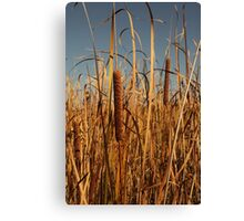 Cat Tails Canvas Print