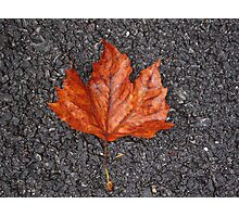 Tarmac Maple Photographic Print
