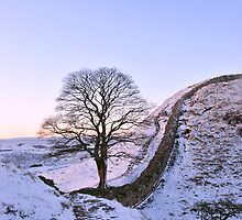 Sycamore Gap  by Joan Thirlaway