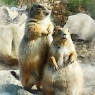 Prairie Dog Formal Portraits by Susan Savad