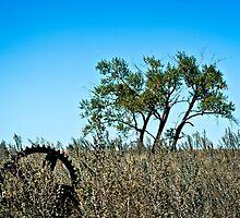 majestic farm field and lone tree by Roxanne Weber