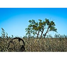 majestic farm field and lone tree Photographic Print
