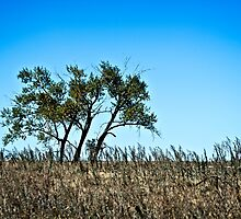 lone rural country tree by Roxanne Weber