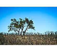 lone rural country tree Photographic Print
