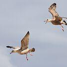 Gull Games ~ by Renee Blake