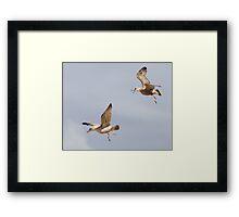 Gull Games ~ Framed Print