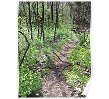 Narrow Path Through The Woods Poster
