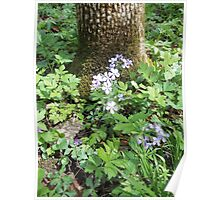 Flowers Gracing The Tree Trunk Poster