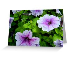 Petunia Power  ^ Greeting Card