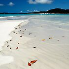 Hill Inlet - Whitsunday Island by Barbara Burkhardt