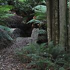 SLOANE RESERVE, MOUNT WILSON by Phil Woodman
