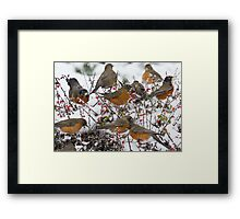 Winter Feast Framed Print