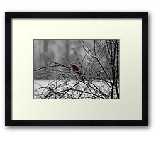 Cardinal in the Snow Framed Print