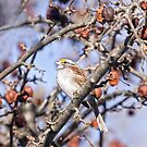 Winter Sparrow by daphsam