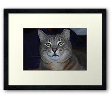 Fat Ferrel Cat. Framed Print