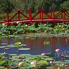 bridge by Cheryl Ribeiro