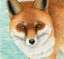 Red Fox - Watercolor Pencil Drawing by M Rogers