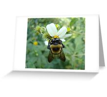 Bumblebee on Bidens alba (Spanish Needles) Greeting Card