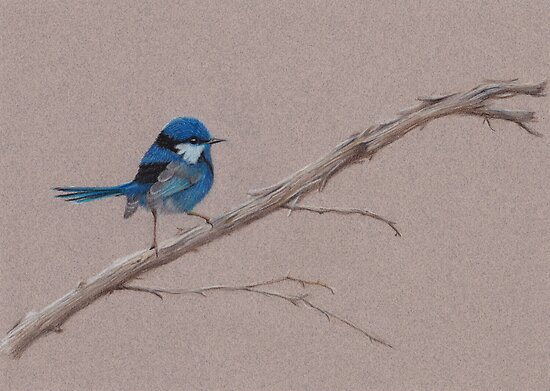 Splendid Fairy-Wren by Catherine Gabriel