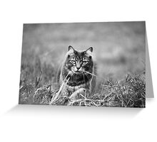 Black and White Critter Greeting Card