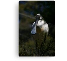 This Is Why I'm Called A Spoonbill Canvas Print
