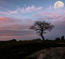 under the moon lights by ketut suwitra