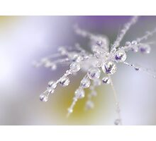 Daisy dew drops Photographic Print
