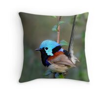 Variegated Fairy-wren Throw Pillow