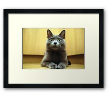 Russian Blue Framed Print