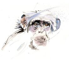 A sad chimp Photographic Print