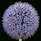 Globe Thistle by Yampimon