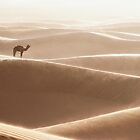 A camel is resting under strong wind! by Yannick Verkindere