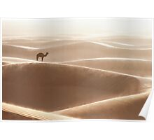A camel is resting under strong wind! Poster