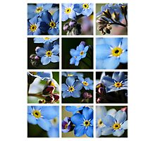 Forget-Me-Nots Montage 1 Photographic Print