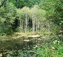 Forest Pond by MOFS