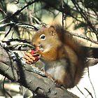 Killer Squirrel Gets Fat by Alex Call
