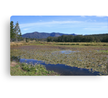 to the south at lake clarrie hall ... Canvas Print