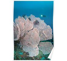 Giant sea fan Poster