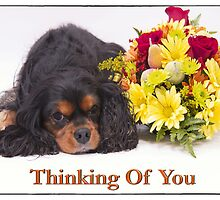 Thinking Of You Cavalier King Charles Spaneil  by daphsam