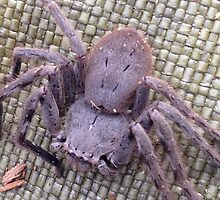 A scary huntsman spider by BrentonPark