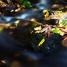 Autumn Streams I by SunDwn