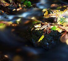 Autumn Streams I by SunDwn