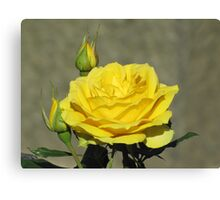 Yellow Splendour Canvas Print