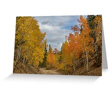 Burning Orange and Gold Autumn Aspens Back Country Colorado Road Greeting Card