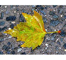 Autumn sidewalk, New York City  Photographic Print