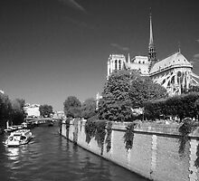 Notre dame de Paris by Nick Coates