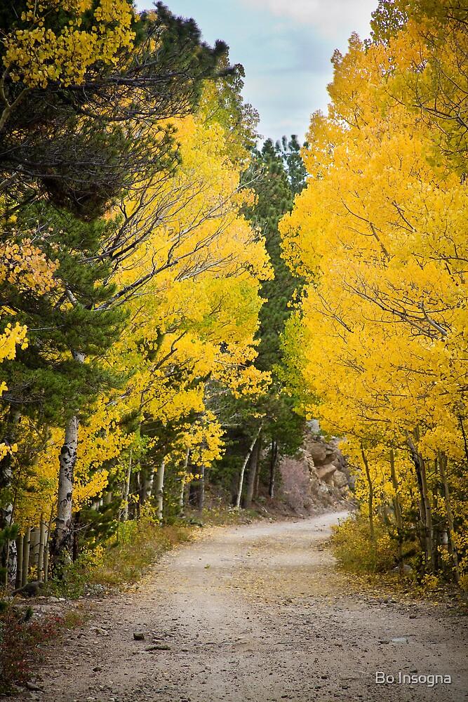 Colorado Autumn Aspen Road Boulder County by Bo Insogna