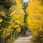 Colorado Autumn Aspen Road Boulder County by Bo Insogna