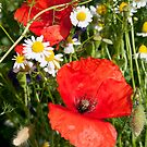 Poppies and Camomile by Dave Godden